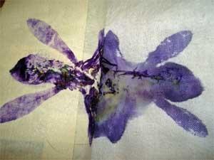 Iris Inkblot